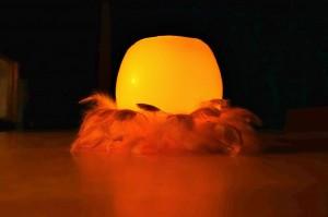Elfenlicht-im-Hühnerfedernest-2015 (11)bearb